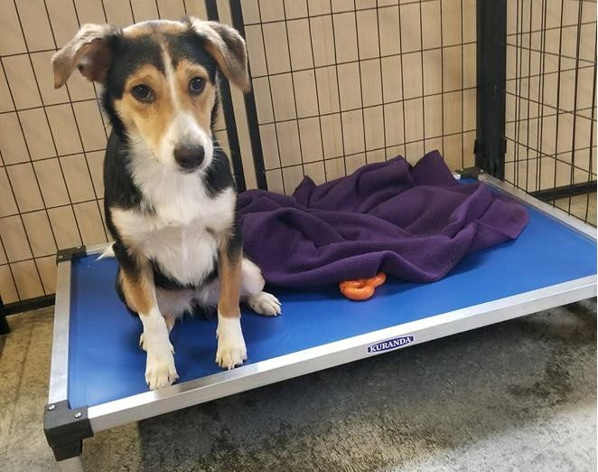Beds For Older Dogs