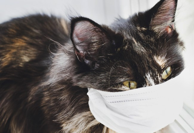 Getting The Best Pet Health Care For Your Pets