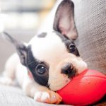 The 5 Easiest Ways To Keep Your Pets Happy