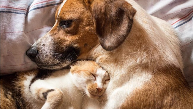 Understating Joint Supplement Pet Health Options Is Important For Your Pet's Well Being