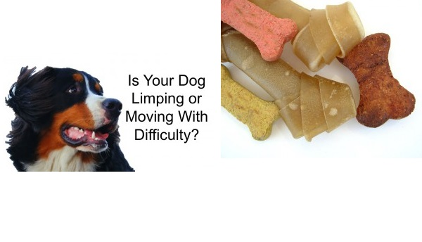 All About Feeding Your Dog – How to make sure that you choose the right dog food