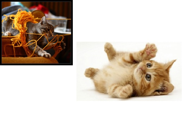 Cats and Kittens – What you need to know about cats
