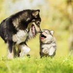 Dogs and Puppies – What you need to know about dogs