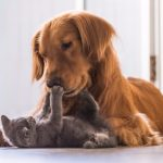 Getting a New Family Pet – Choosing the right family pet