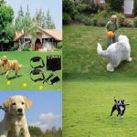 Keeping your dog safe while outside – Boundaries, training and exercise