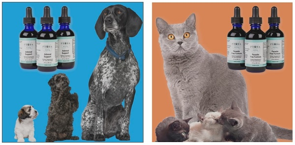 Natural Remedies For Cats and Dogs