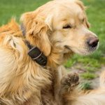 What to do about fleas – BELIEVE ME I know all about FLEAS